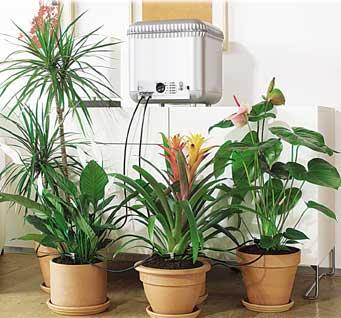 اهمية النباتات المنزلية حياة الانسان