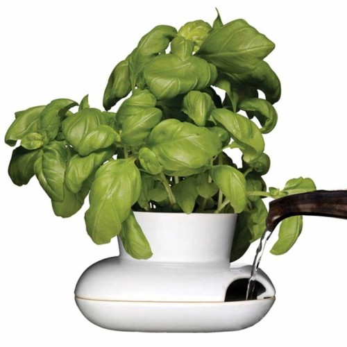 Fresh Herb Pot