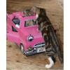 Catillac Cat Play House