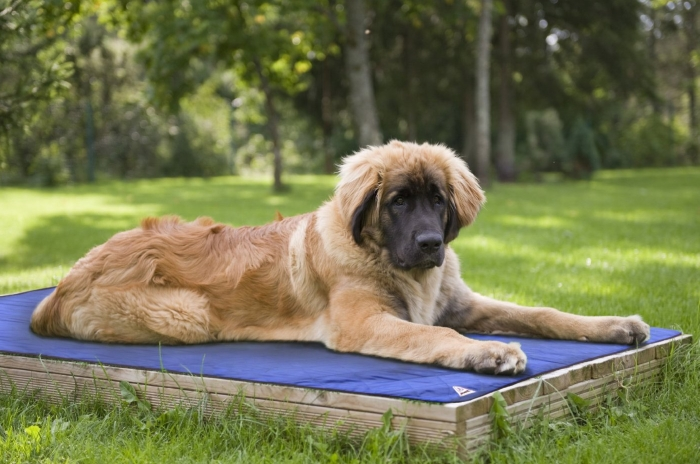 Evaporative Dog Cooling Mats