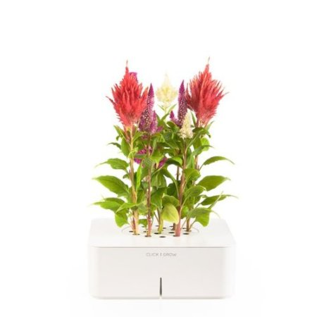 Click and Grow Self Watering Planter