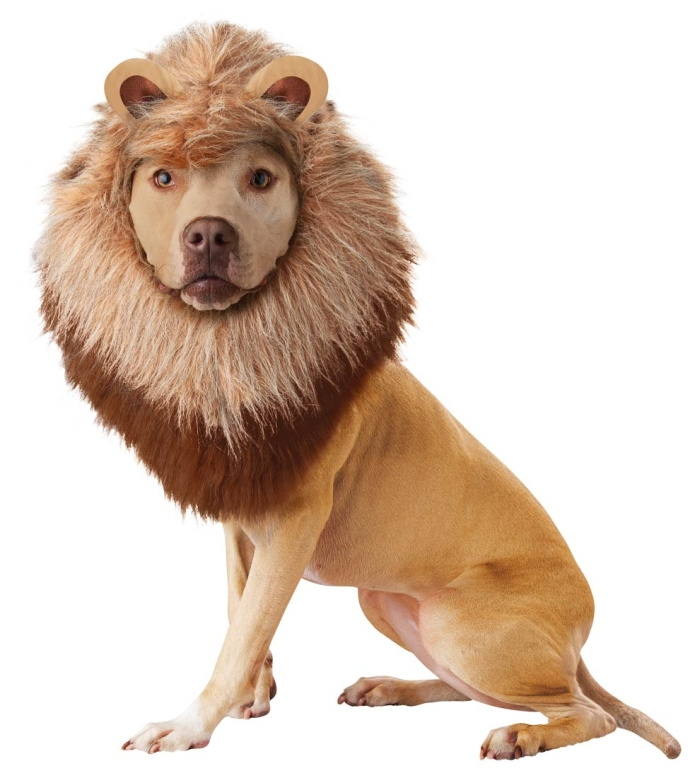 20123-Lion-Dog-Costume-large