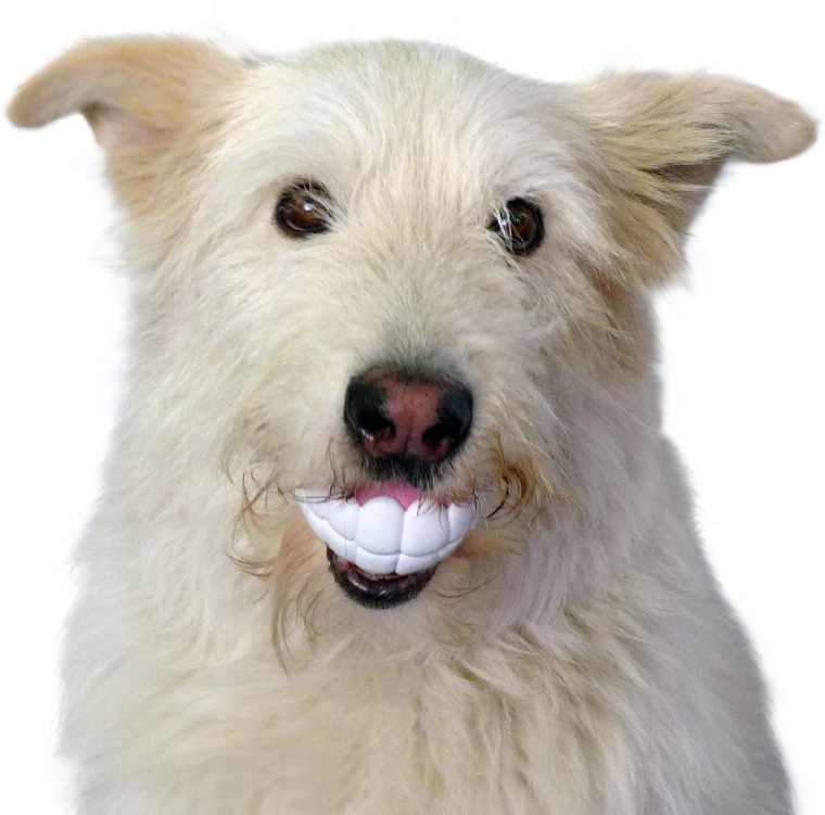 Funny Teeth-Shaped Ball for Playing Fetch with Your Dog or Puppy