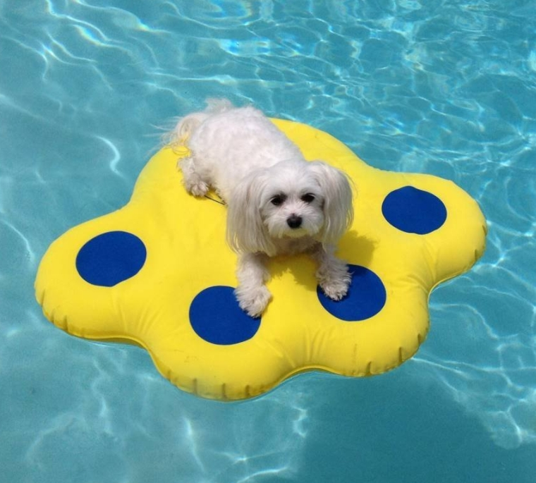Paws Aboard Doggy Dog Pool Float