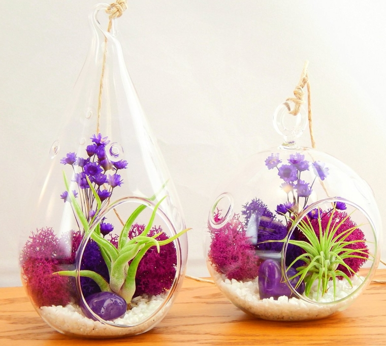 Bliss Gardens Air Plant Terrarium Combo Kit