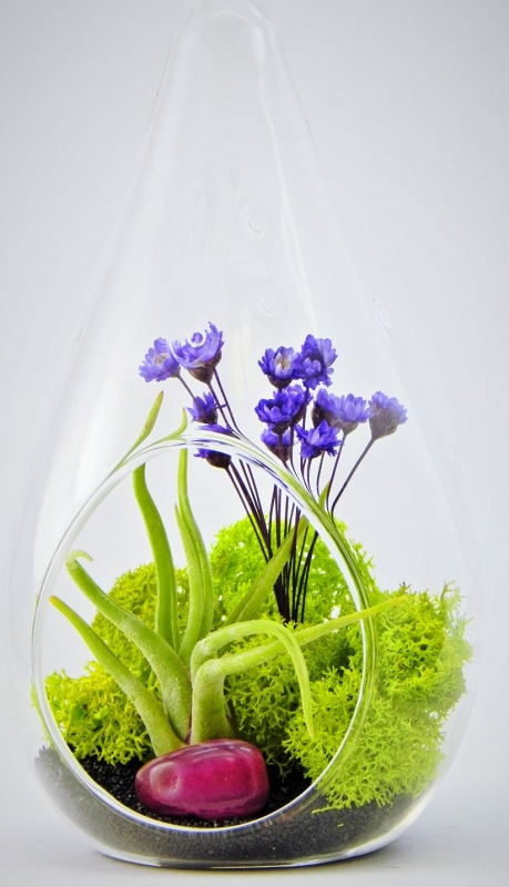 Small Air Plant Terrarium Kit