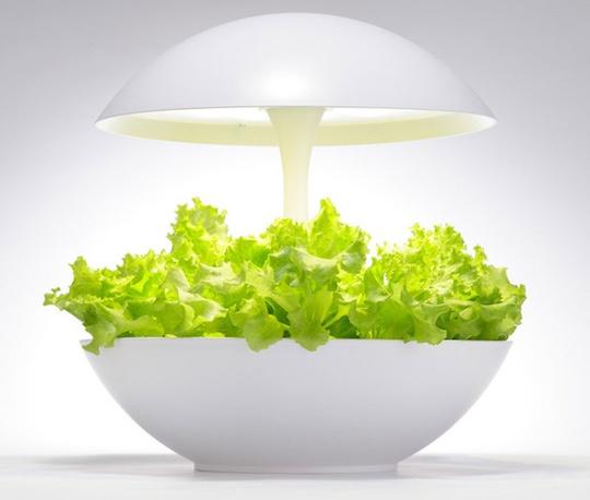 akarina-01-hydroponic-grow-box-culture-salad-1