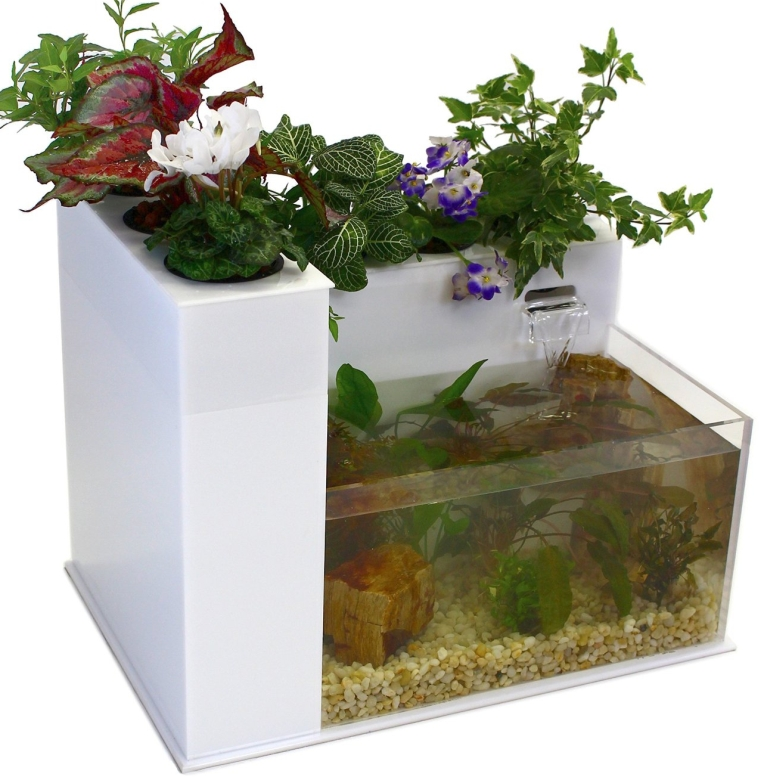 Fin to flower aquaponics for Fish and plants in aquaponics