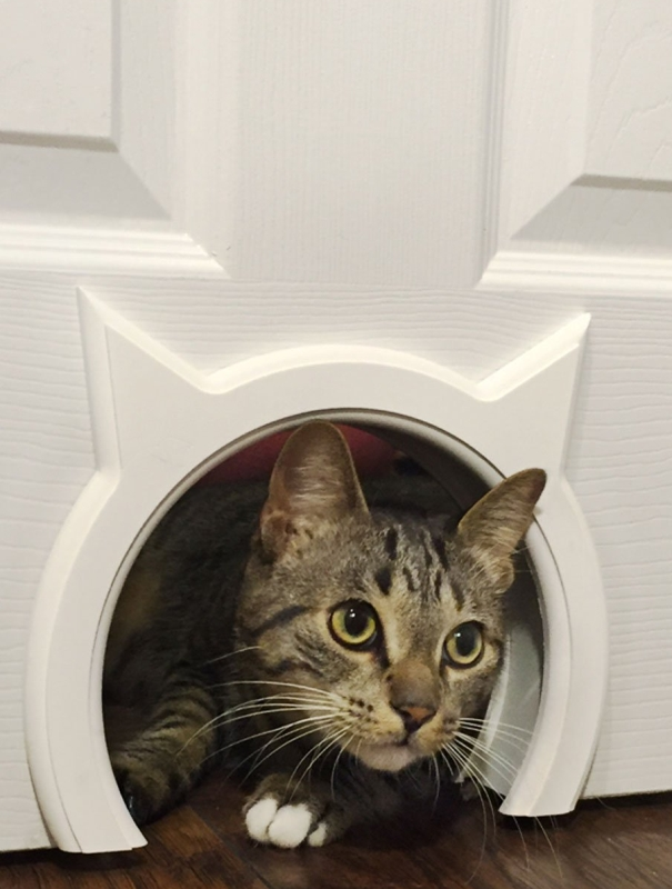 Pass Interior Cat Door