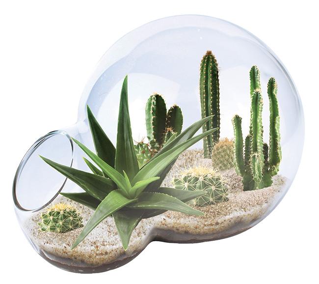 jinq_desert_bubble_terrarium