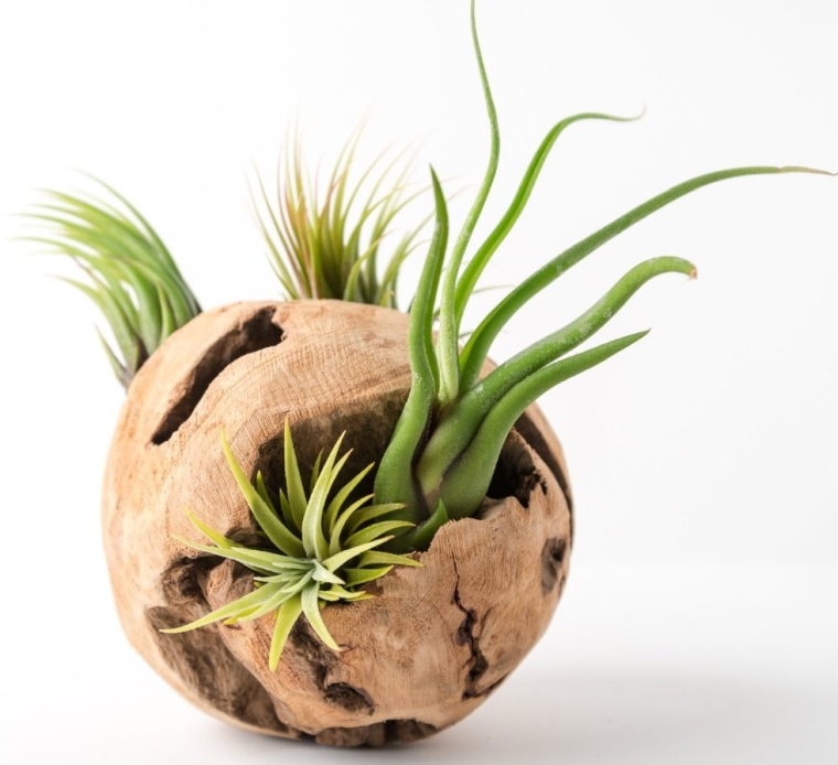 Drift Wood Air Plant Orb 6 Round Terrarium Kit