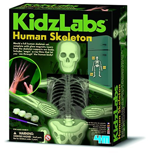 4m-kidz-labs-human-skeleton-play-set