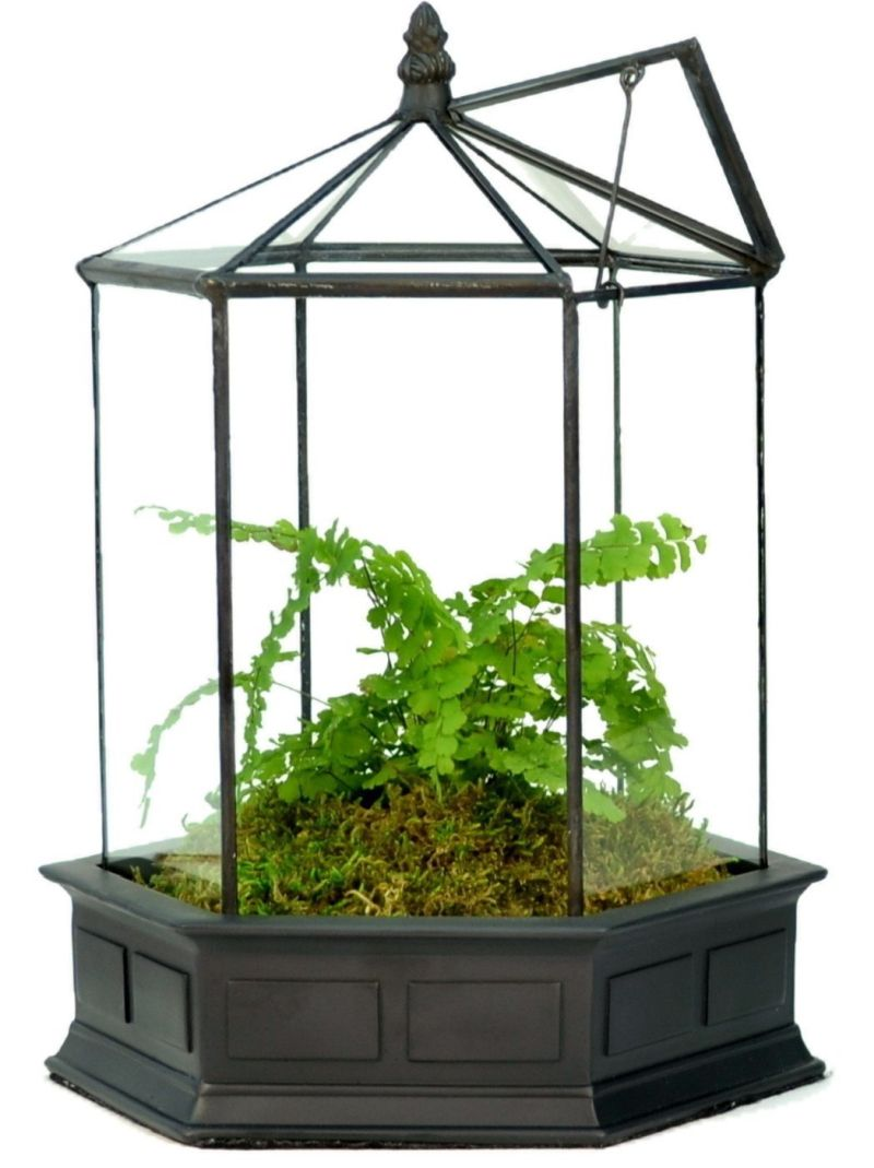 h-potter-six-sided-glass-terrarium-planter