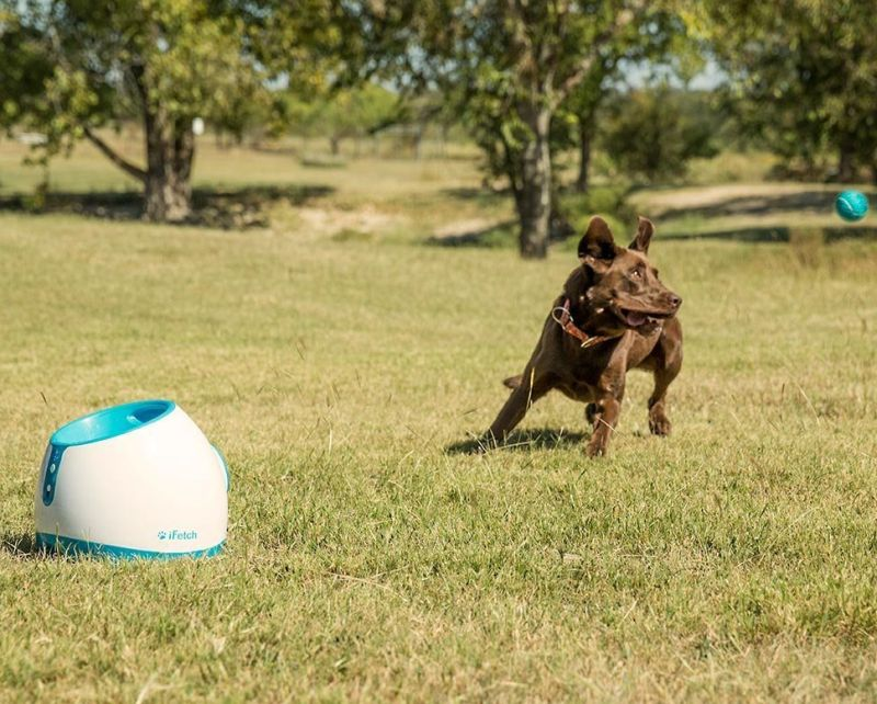 interactive-ball-thrower-for-dogs-launches-standard-tennis-balls