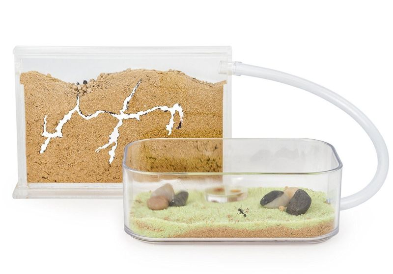 sand-ant-farm-basic-anthill-formicarium-educational-ants