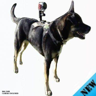 Dog Camera Mount for Gopro