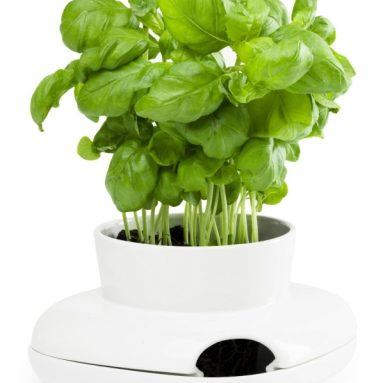 Herbs/Spices Herb Pot Single