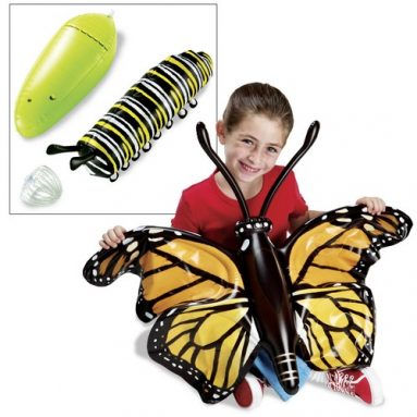 Inflatable Butterfly Life Cycle