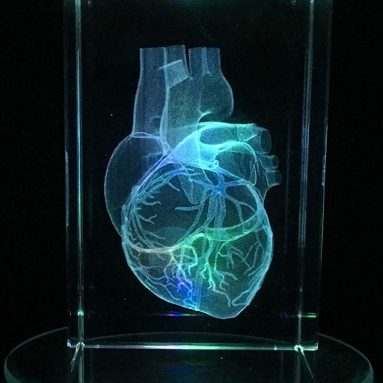 3D Human Heart Anatomical Model Paperweight