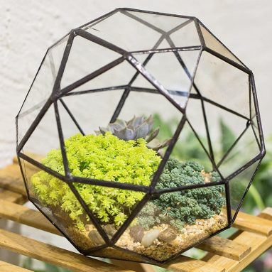 Geometric Dome Terrarium Triangular Pentagon Mix