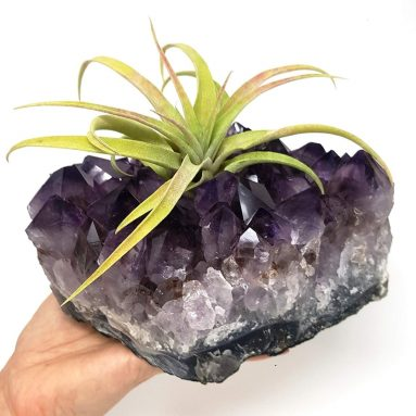 Amethyst Cluster Air Plant Holder/Relaxation Home