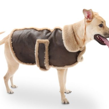 The Dog's Leather Shearling Bomber Jacket