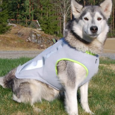 Dog Cooling Vest Harness Cooler Jacket