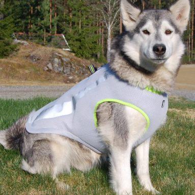 Dog Cooling Vest Harness Cooler Jacket
