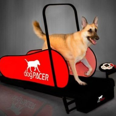 Dog Treadmill