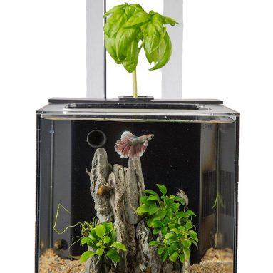 EcoQube C Wireless Remote Aquarium