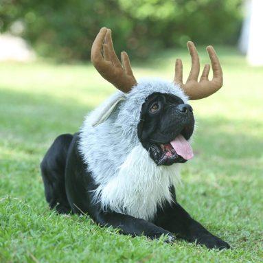 Funny Pet Moose Costumes
