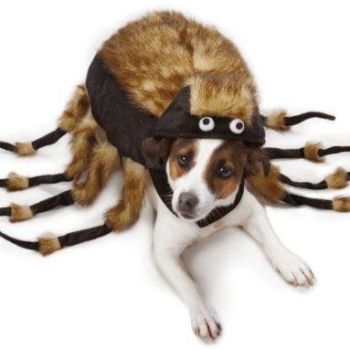 Fuzzy Tarantula Costume