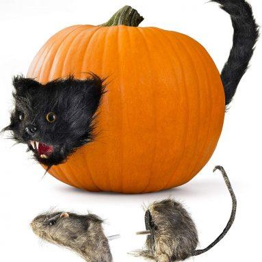Halloween Creepy Scary Cat