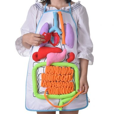 Internal Organs Model Children Physiological Education Toy