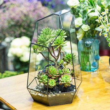 Irregular Prism Glass Geometric Terrarium