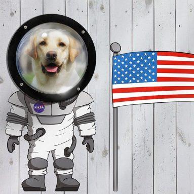 Kenley Pet Dog Fence Peek Window