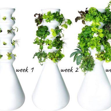 Lettuce Grow 12-Plant Farmstand