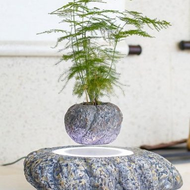 Levitation Air Bonsai