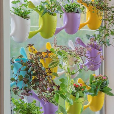 Livi Palm Pot – Assorted Colors-Indoor Suctioned Window/Wall Planter for Plants and Herbs