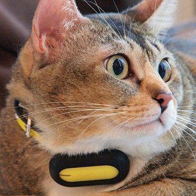 PETBLE Dog Cat Pet Smart Tag Tracker