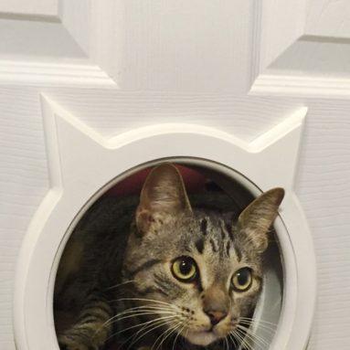 Pass Interior Cat Door
