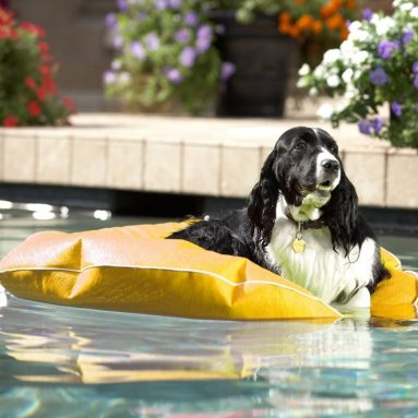 Poochie Pool and Deck Lounger