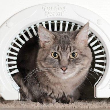 Portal Cat Door for Interior Doors