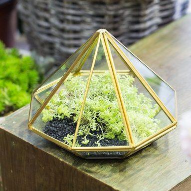 Tabletop Desk Succulent Fern Moss Plant Display Terrarium