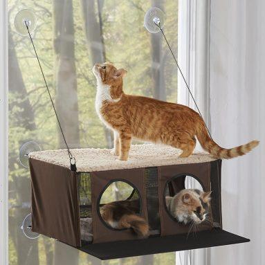 The Cat's Windowed Penthouse