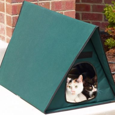 The Only Outdoor Heated Multi Cat Shelter
