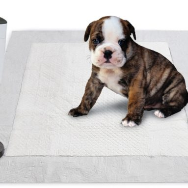 The Pavlovian Puppy Potty Trainer