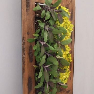 Wall Mounted Living Wall Frame