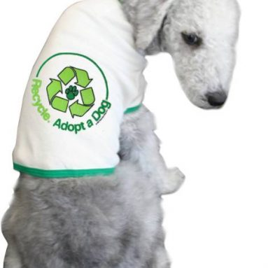 Recycle. Adopt a Dog