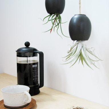 Hanging AirPlant Pod